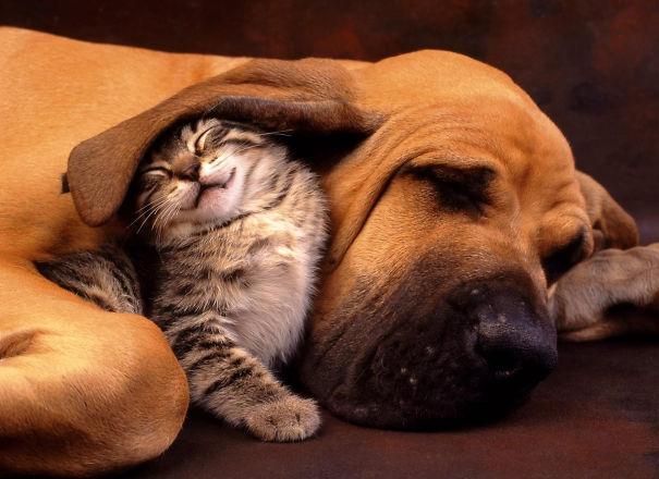 Собака и котик