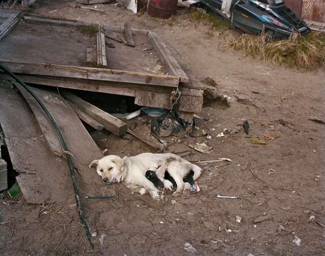 Собака по кличке Снежок со своими щенками