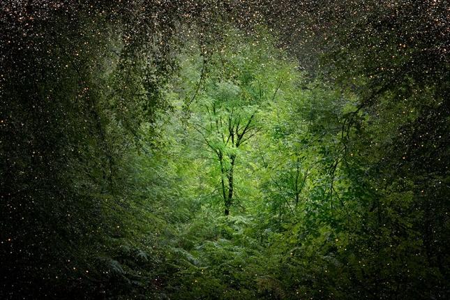 surreal-forest-photograhy-ellie-davis-12__880