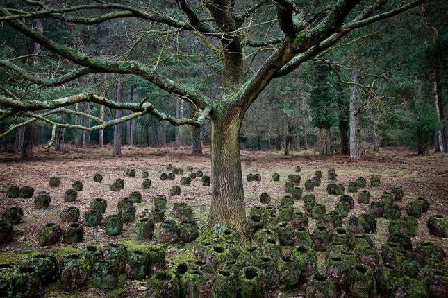 surreal-forest-photograhy-ellie-davis-15__880