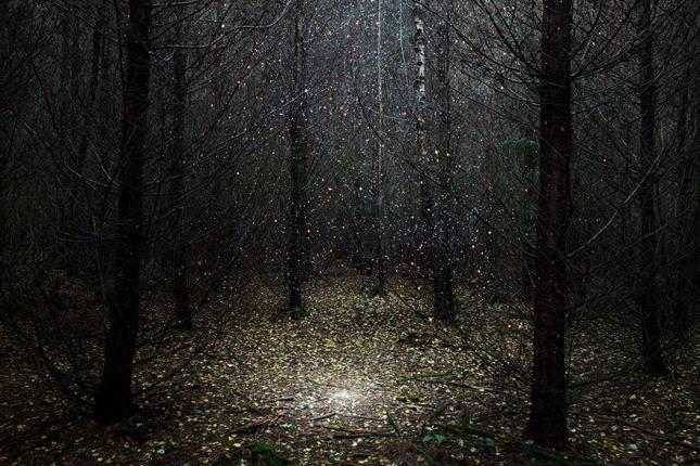 surreal-forest-photograhy-ellie-davis-1__880