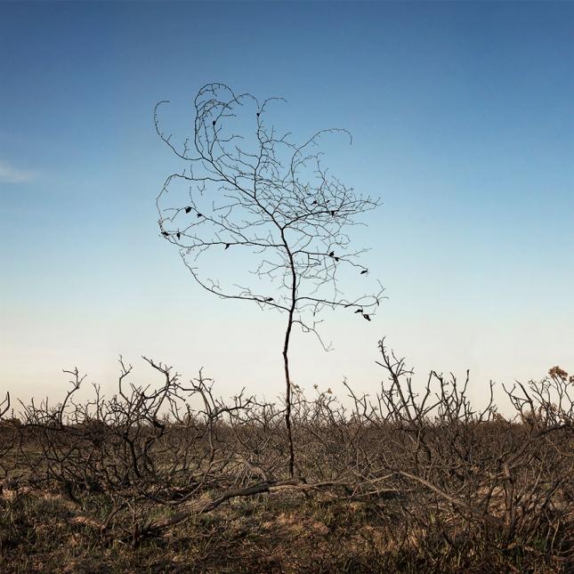 surreal-forest-photograhy-ellie-davis-21__880