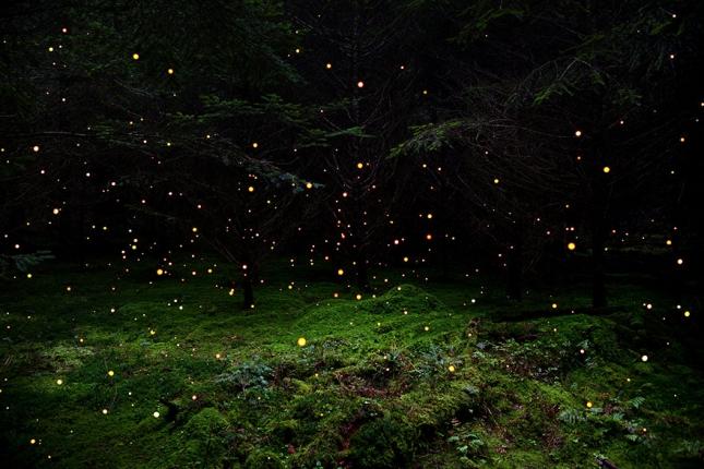surreal-forest-photograhy-ellie-davis-5__880
