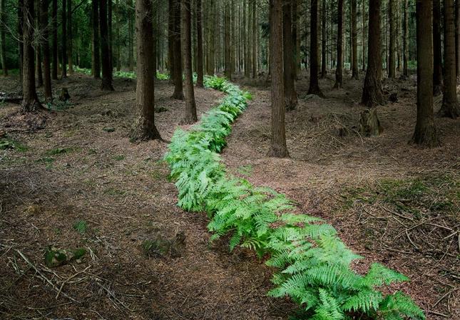 surreal-forest-photograhy-ellie-davis-6__880