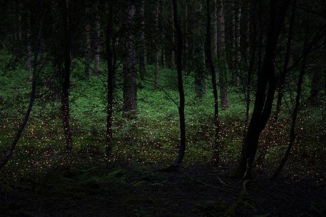 surreal-forest-photograhy-ellie-davis-8__880