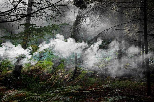 surreal-forest-photograhy-ellie-davis-9__880