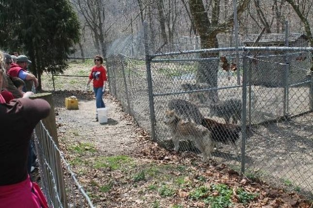 wolf-sanctuary-of-pa (1)