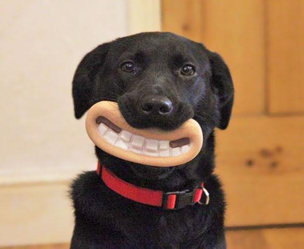 Зубы должны быть в порядке