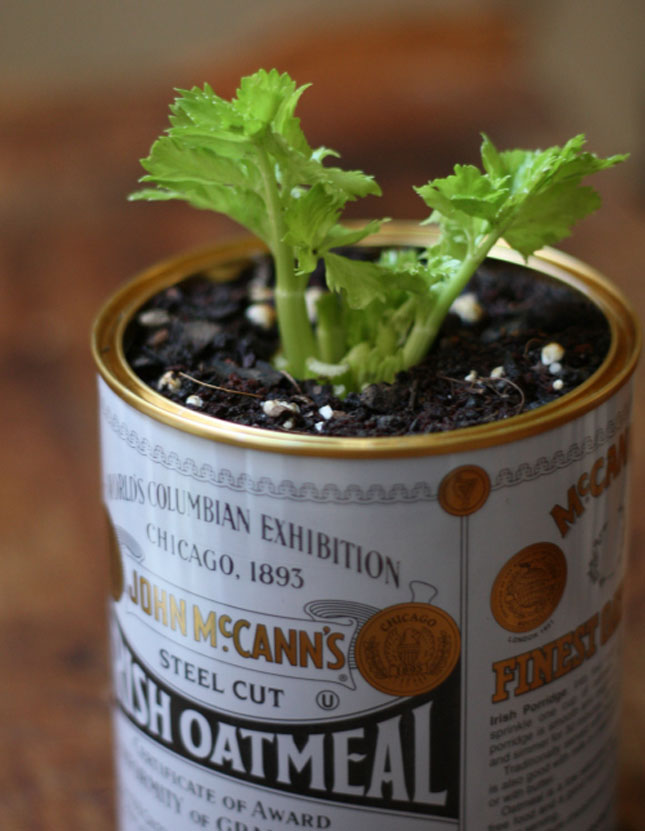 gardening-9