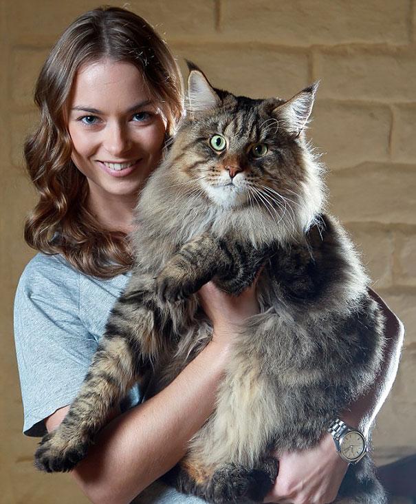 huge-cats-12__605