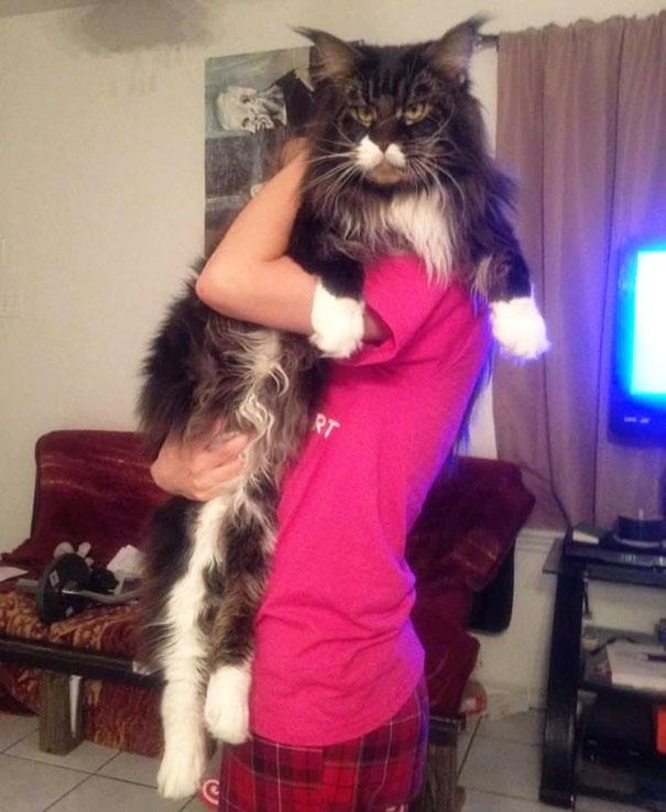 huge-cats-26__605