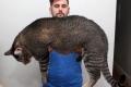 huge-cats-28__605