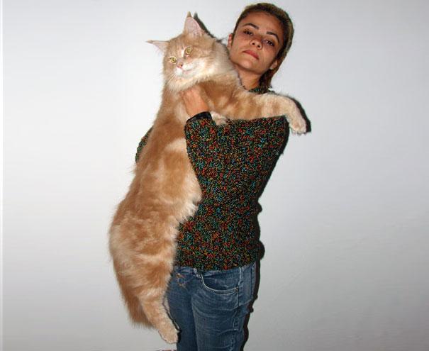 huge-cats-41__605