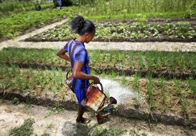 Маленькая африканка поливает урожай в Центральной Африке, в Банги