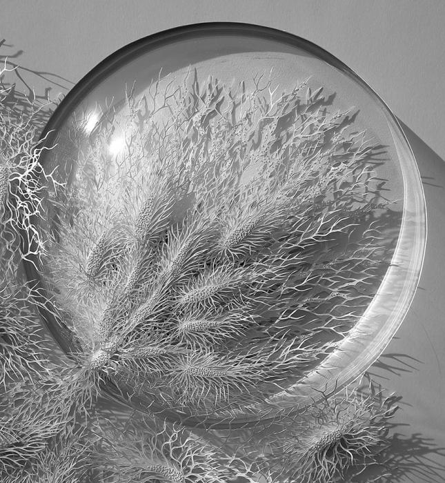 paper-cuttings-ecoli-bacteria-cut-microbe-rogan-brown-5