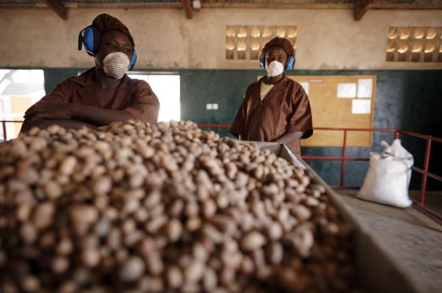 Производительницы масла ши в Буркина-Фасо