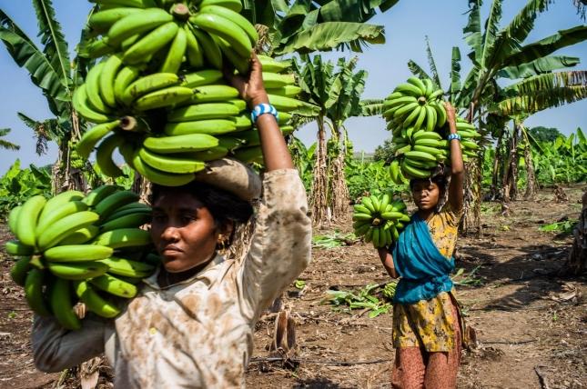 Работницы несут урожай, Индия