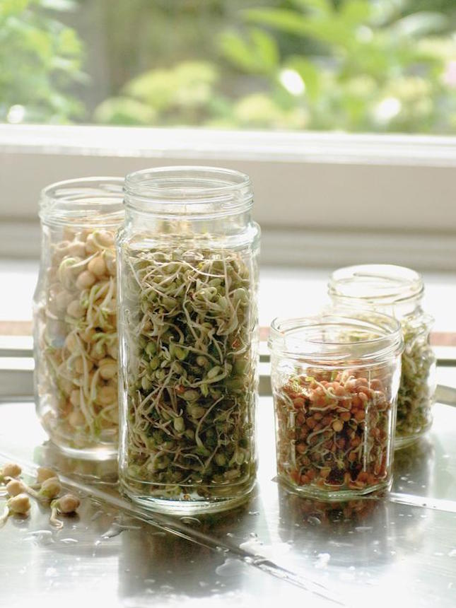 RX-DK-VGN07401_bean-sprouts_s3x4_lg