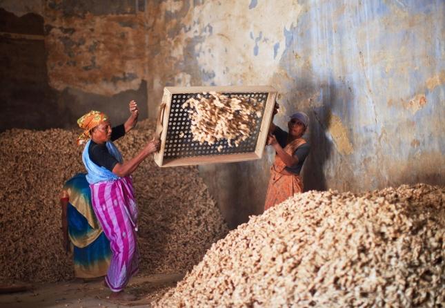 Сортировщицы имбиря на фабрике Керала в Индии