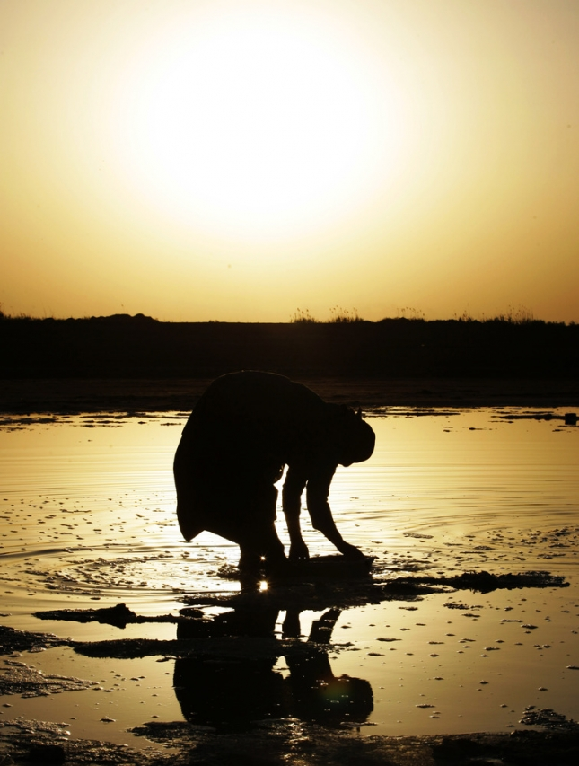 Женщина собирает соль, Латифия, Ирак