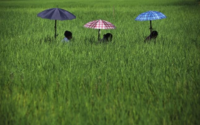 Женщины на плантациях в Непале собирают сорняки. Читван.