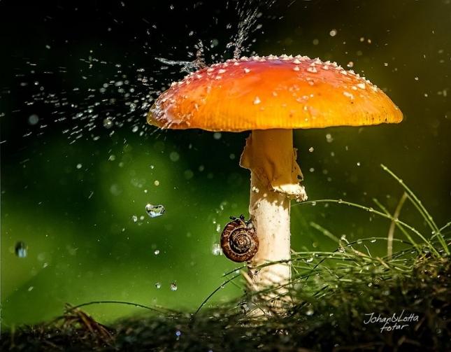 Даже земноводные боятся дождя. И зонты выбирают самые красивые.