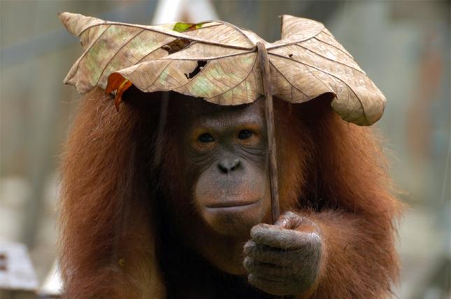 Каждой девочке свой зонтик!