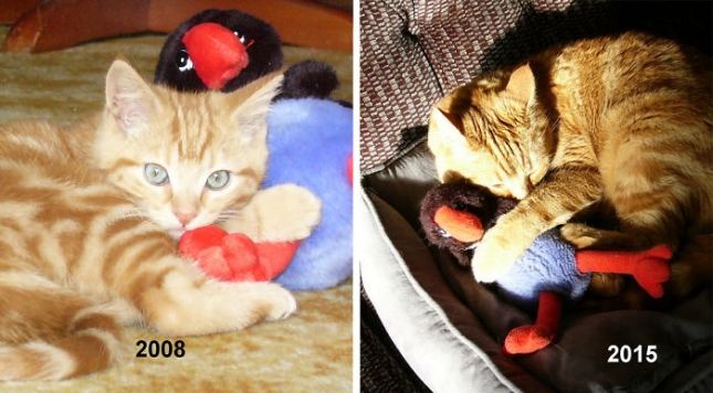 cat-toy-before-after__700