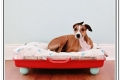 diy-dog-beds-for-large-dogs1