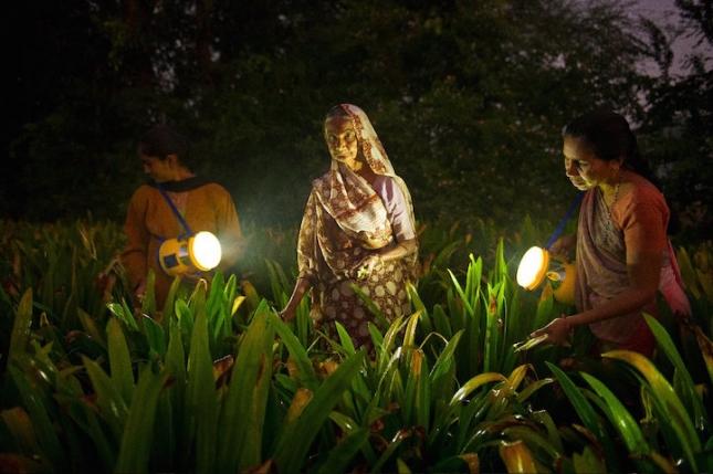 Женщины в Индии в штате Гуджарат собирают лилии рано поутру. У них нет постоянной работы, и единственный источник дохода — продажа цветов на рынке. Все они пытаются получить работу в SEWA.
