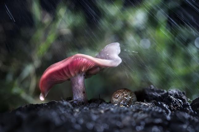 И снова гриб