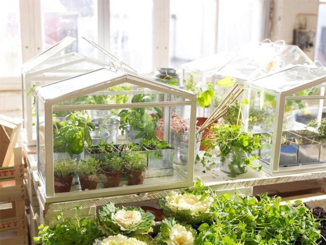 IKEA-greenhouse-645x485