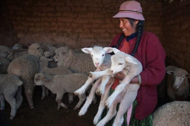 Лурдес Пилько перуанский фермер в Андах, живет на побережье озера Титикака. Она освоила навыки ветеринара, и теперь может лечить свою отару овец, которые массово гибнут из-за резких климатических изменений в регионе. Никто ей не помогает, никто не дал денег на лечение. Она одна возится с сотнями животных, не успевая порой даже поспать.