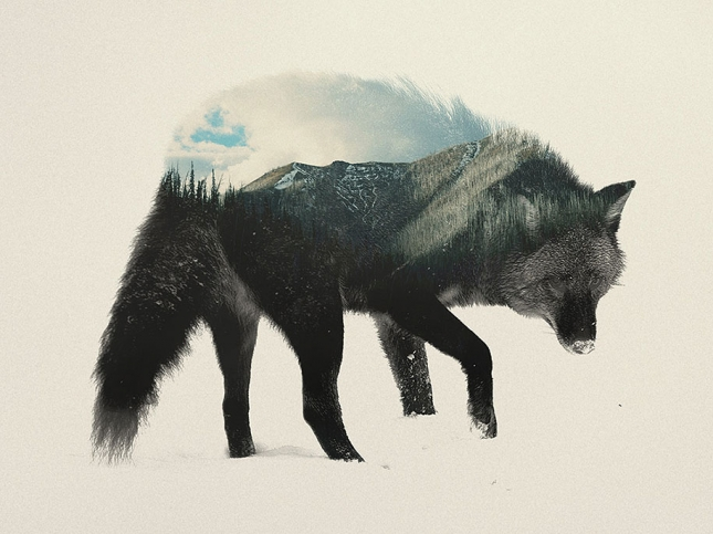 nature-photography-double-exposure-animal-portraits-andreas-lie-1