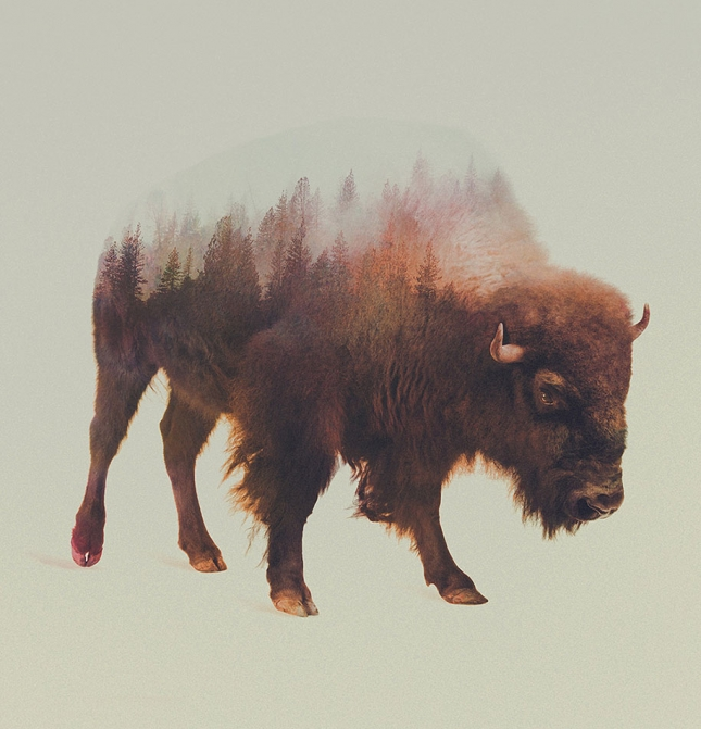 nature-photography-double-exposure-animal-portraits-andreas-lie-10