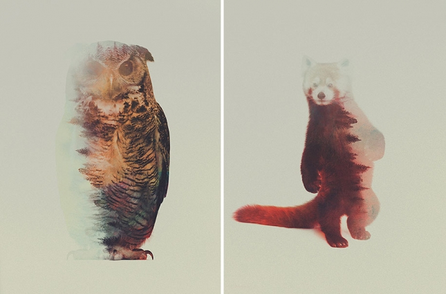 nature-photography-double-exposure-animal-portraits-andreas-lie-11-16