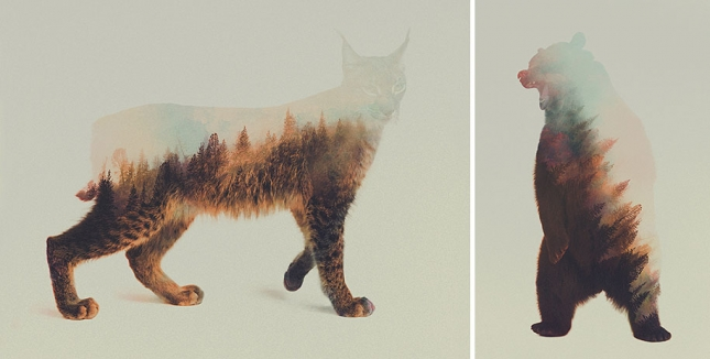 nature-photography-double-exposure-animal-portraits-andreas-lie-12-13