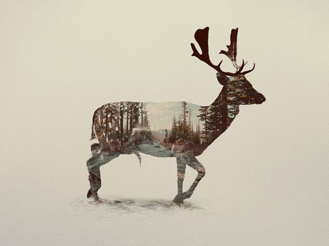 nature-photography-double-exposure-animal-portraits-andreas-lie-17