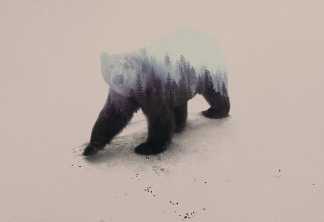 nature-photography-double-exposure-animal-portraits-andreas-lie-19