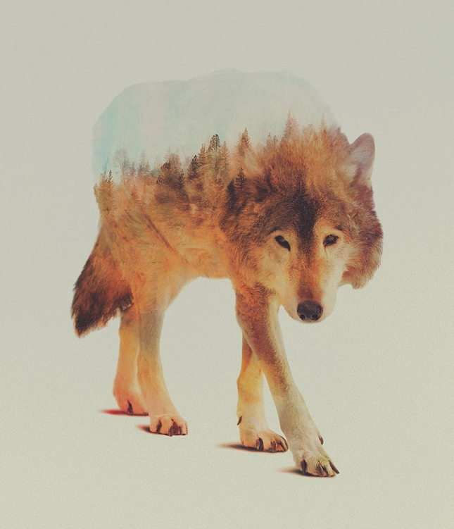 nature-photography-double-exposure-animal-portraits-andreas-lie-2