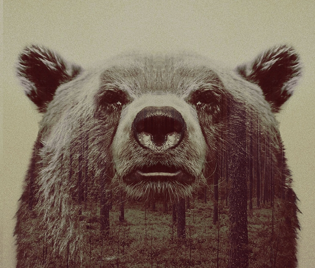 nature-photography-double-exposure-animal-portraits-andreas-lie-20