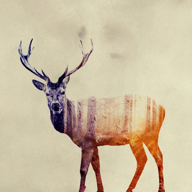 nature-photography-double-exposure-animal-portraits-andreas-lie-21