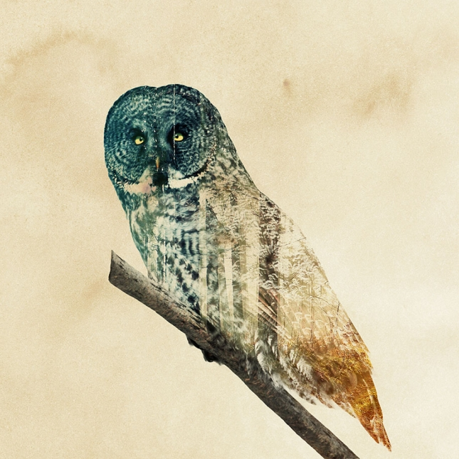 nature-photography-double-exposure-animal-portraits-andreas-lie-22