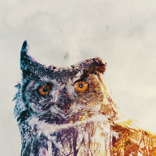 nature-photography-double-exposure-animal-portraits-andreas-lie-23
