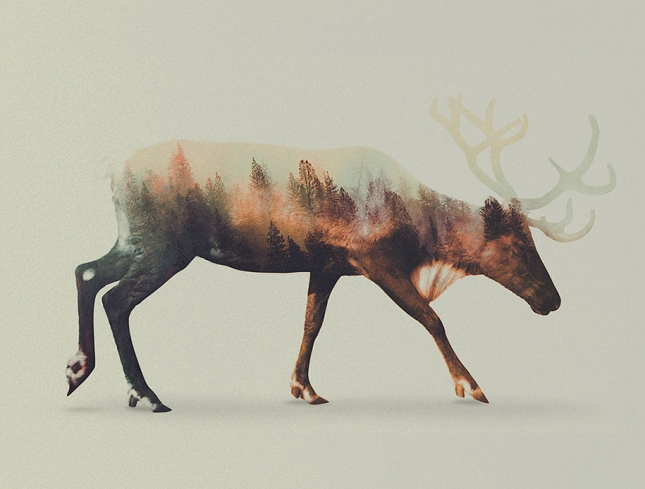 nature-photography-double-exposure-animal-portraits-andreas-lie-4