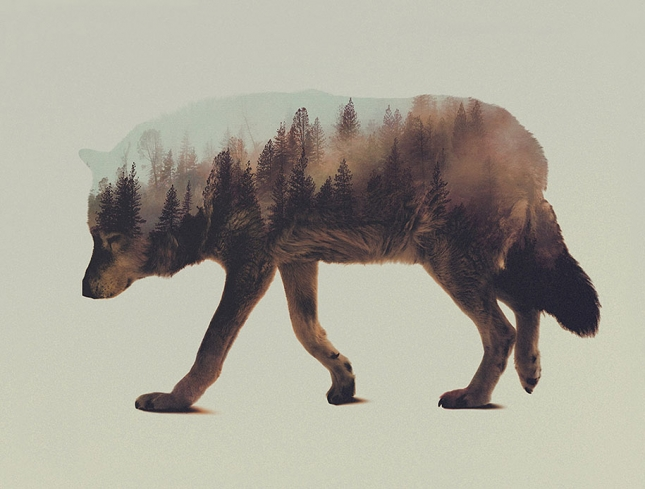 nature-photography-double-exposure-animal-portraits-andreas-lie-6