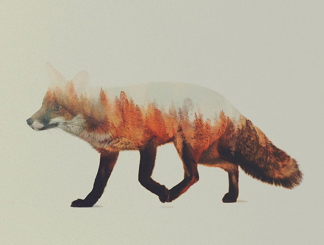 nature-photography-double-exposure-animal-portraits-andreas-lie-7