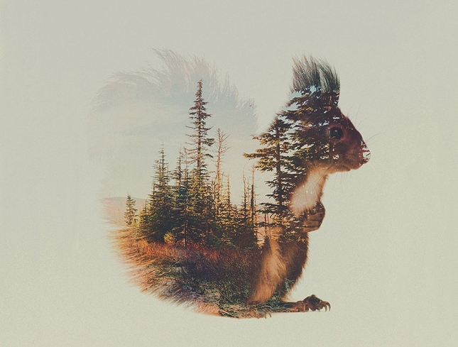 nature-photography-double-exposure-animal-portraits-andreas-lie-8