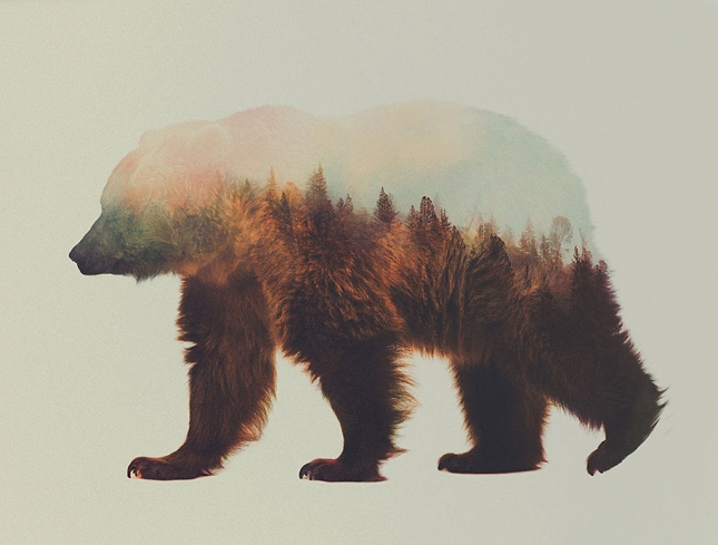 nature-photography-double-exposure-animal-portraits-andreas-lie-9