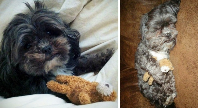 pets-growing-up-with-toys-16__700